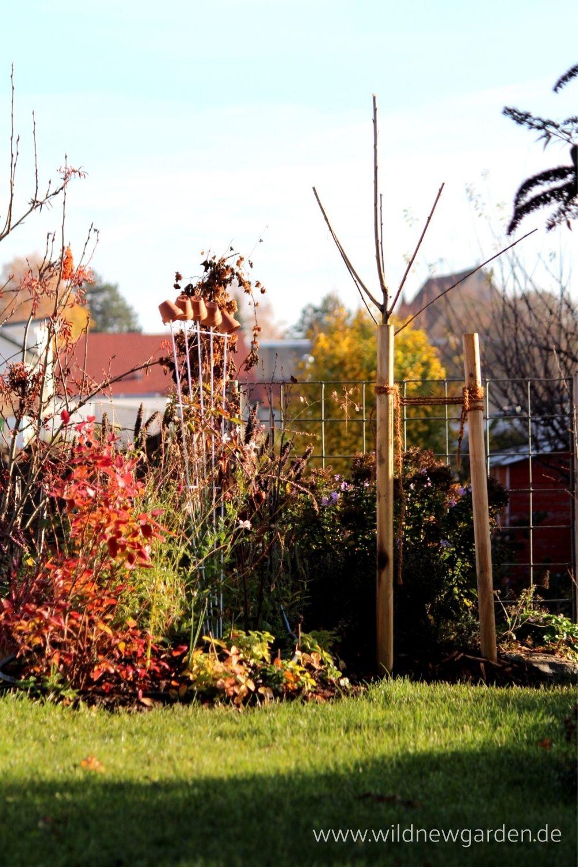 Kirschbaum pflanzen im November